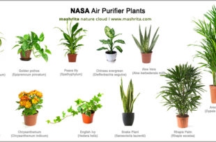 Best indoor plants list such as you can find here. The big list of most common indoor plants helps to purify your indoor air pollution
