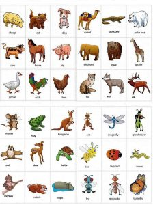 Animals-name-in-English-a-to-z-with-pictures